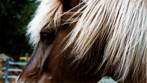 Erfahrungen mit Pferden